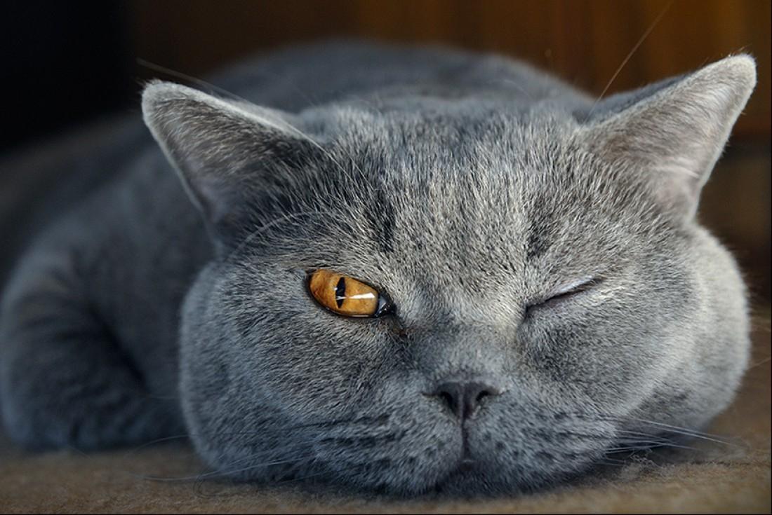 должны смешные коты британцы картинки скоростным маневренным традиционно