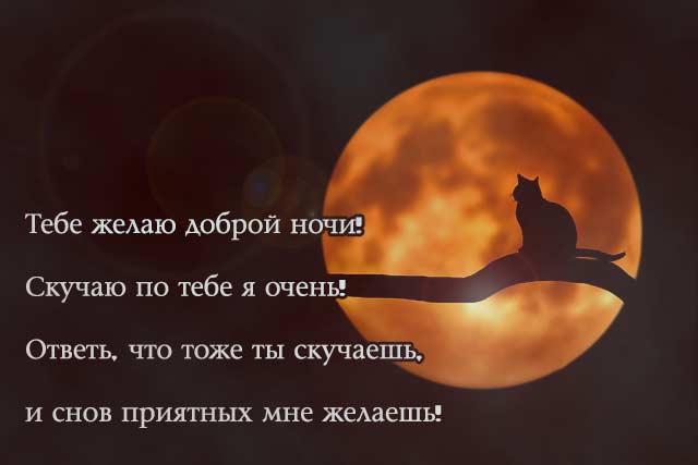 Открытка спокойной ночи сладких снов с котенком